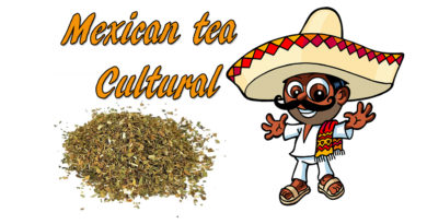 Mexican tea cultural tea lover